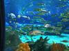 Video of Ripley's Aquarium