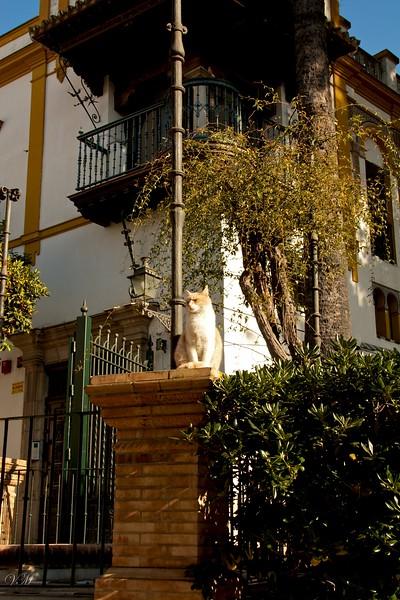 A cat guarding the entrance into the historic Santa Cruz district.