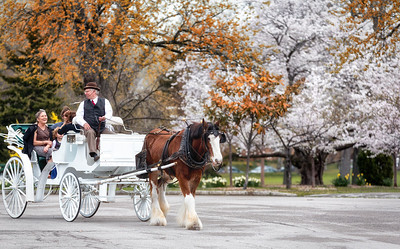 Tower Grove Park Horse Carriage Ride