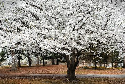 Lafayette Square Park Spring