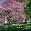 Peaceful Spring