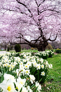 Tower Grove Park Spring