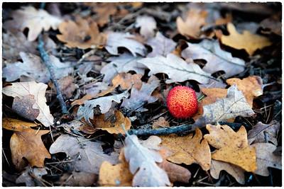 l'objet étranger dans le feuillage   the alien object in the leaves