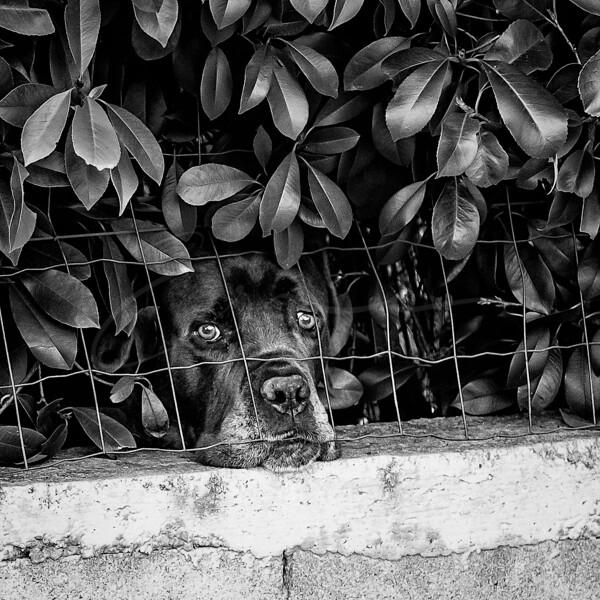 la solitide - le confinement   loneliness - lockdown