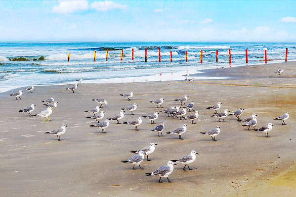 The March of the Seagulls