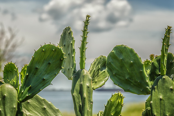Just Some Cactus - Galveston, TX