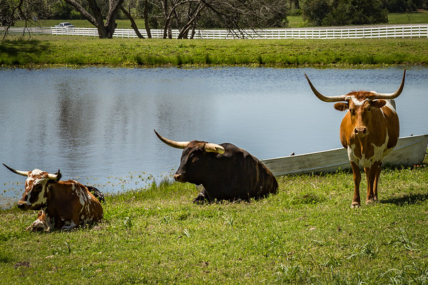 A lazy day in Round Top, TX