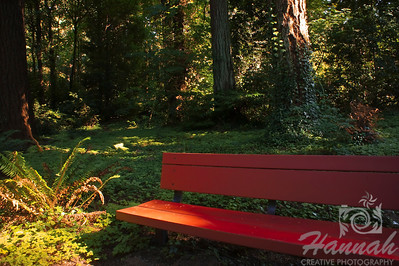 "Lone Bench shot at the botanical gardens of ""The Grotto"" in Portland, Oregon  © Copyright Hannah Pastrana Prieto"