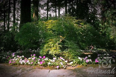 """Native northwest plants at the botanical gardens of """"The Grotto""""  located in Portland, Oregon  © Copyright Hannah Pastrana Prieto"""