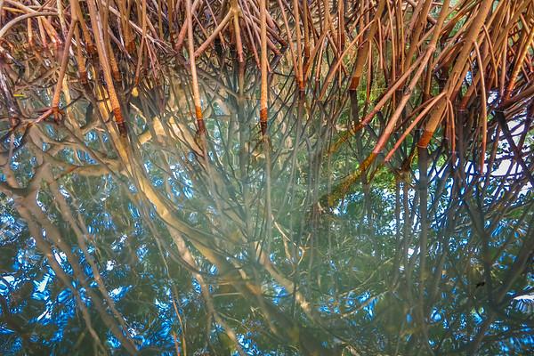 excursion dans les mangroves | trip to the mangroves