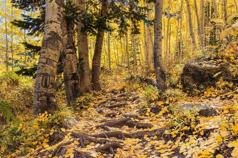 Maroon Bells National Park-Scenic Loop Trail