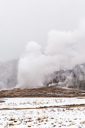 Old Faithful in The Snow