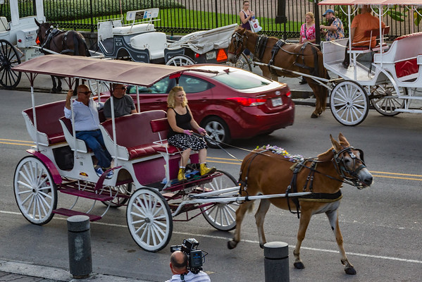 New Orleans, LA - Oh the Carriage Rides You Can Ride!