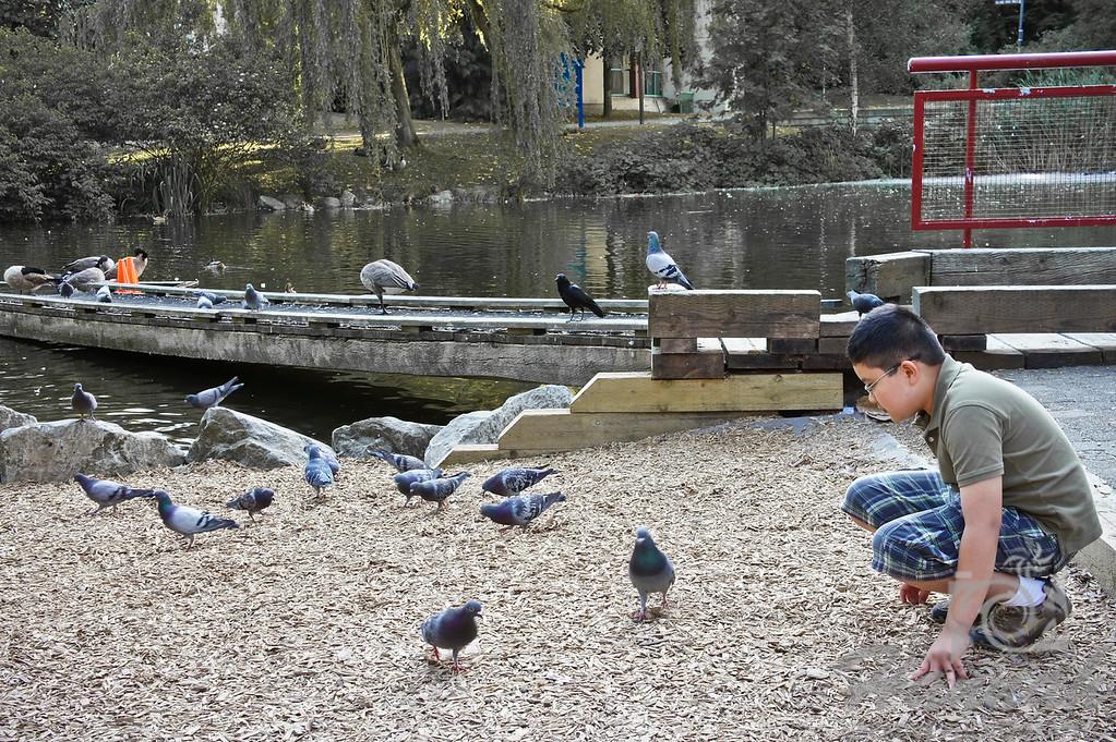 Boy feeding the pigeons of Granville Island Vancouver, British Columbia, Canada   © Copyright Hannah Pastrana Prieto