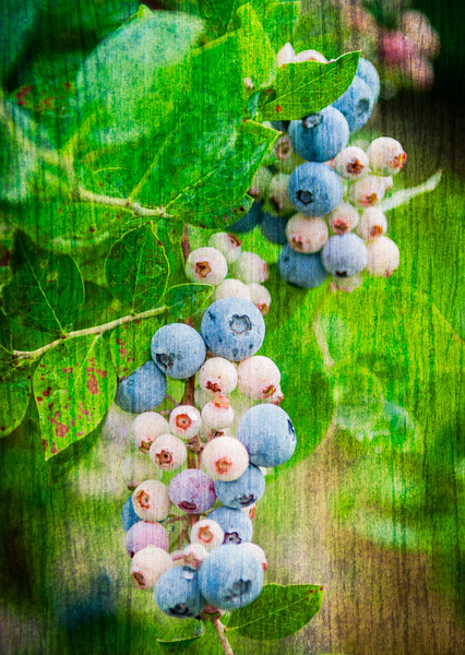 Virginia Blue Berries