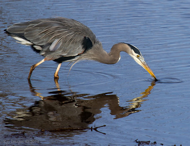 GBH slaying aquatic plants.