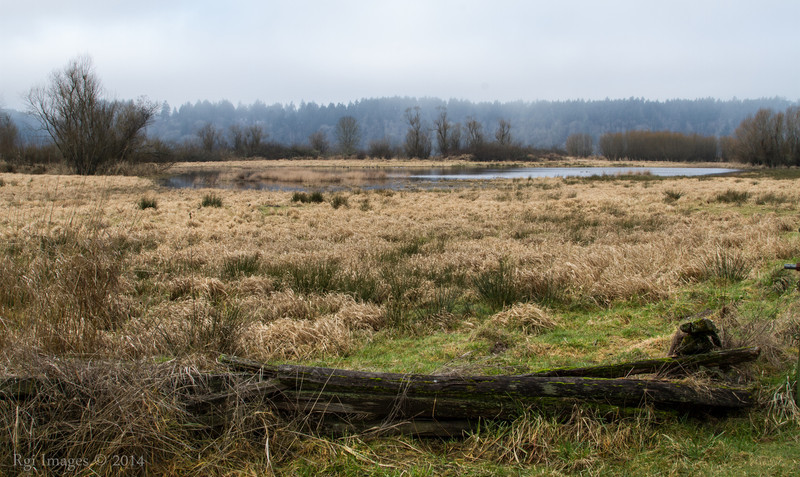 View Southeast across the Refuge from near HQ building.