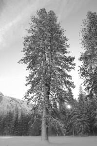 Yosemite  089