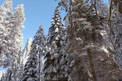 Yosemite  468