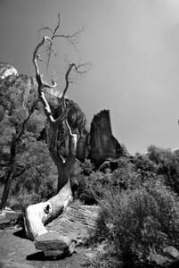 Zion National Park | Utah | US - 0006