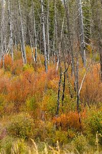 Fall colors in Jasper National Park, Alberta, Canada.