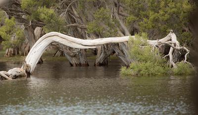 Kangaroo Island wetland, South Australia