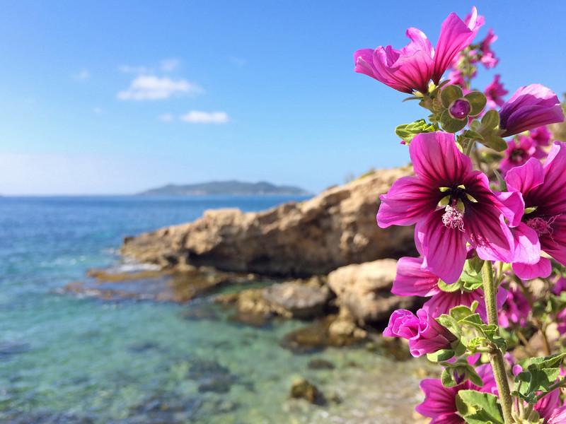 Spring in Ibiza Spain