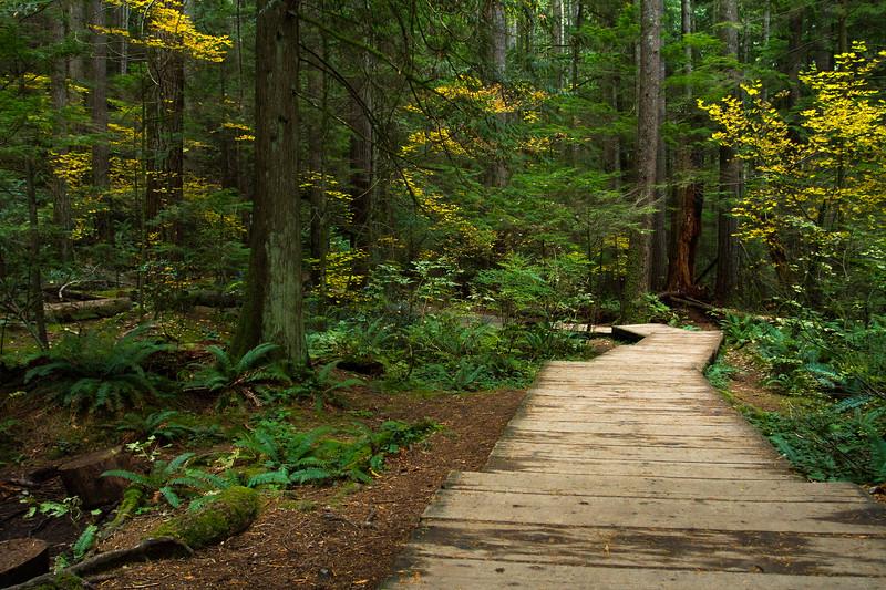 Boardwalk at Lynn Canyon Park, Vancouver, British Columbia, Canada.