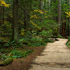 Boardwalk at Lynn Canyon Park, Vancouver, British Columbia, Canada.