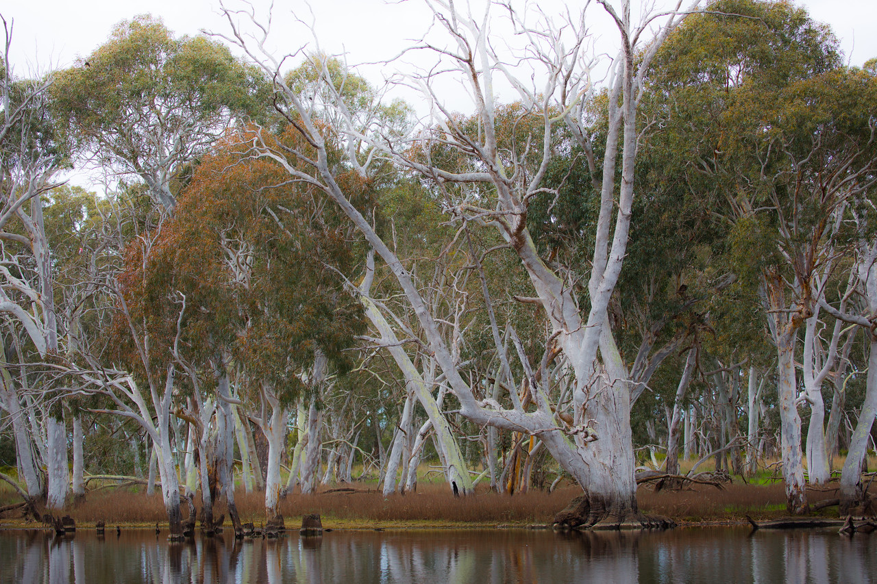 Duck Lagoon, Kangaroo Island, SA