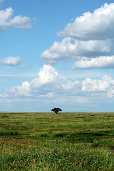 Serengeti, Tanzania Endless plains of the Serengeti.