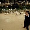 Children feeding the pigeons at the Parque de Maria Luisa.