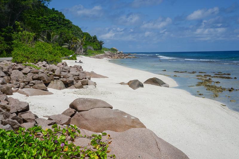 Une personne profite de l'ombre d'un cocotier sur la plage d'Anse Bananes