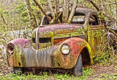 Vintage car among the trees