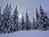 Cascade Mountains, WA.