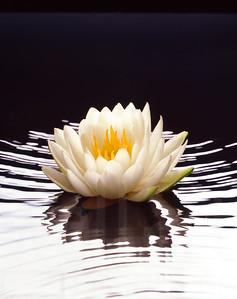 Floating Flower | Wall Art Resource