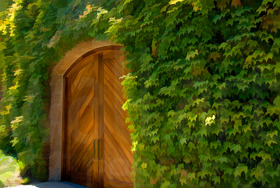 Napa Valley Vineyards 003 | Wall Art Resource