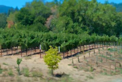 Napa Valley Vineyards 002 | Wall Art Resource