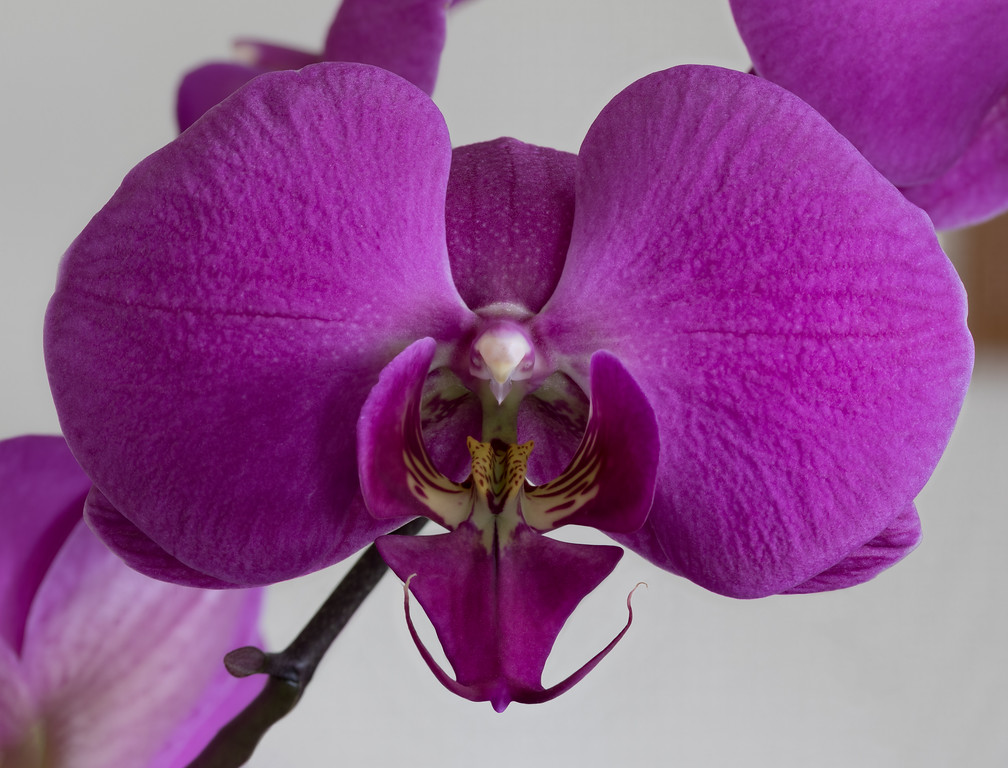 Single Purple Orchid Flower