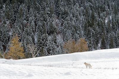Olli - Andalo, Trento, Italy - December 28, 2014