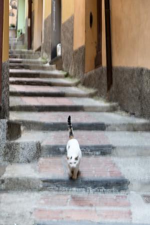 Cat - Vernazza, La Spezia, Italy - August 29, 2015