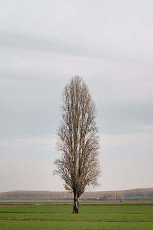 Lonely Tree - Crevalcore, Bologna, Italy - November 30, 2018