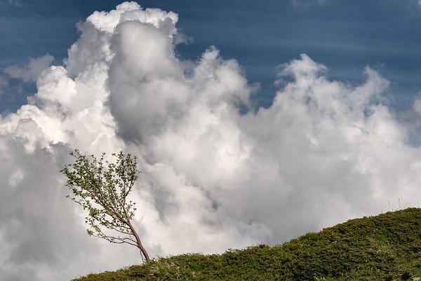 L'Ultimo Albero (the last tree) - Prati di Sara, Villa Minozzo, Reggio Emilia, Italy - June 3, 2018