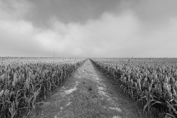 Crops - Sant'Agata Bolognese, Bologna, Italy - August 28, 2020