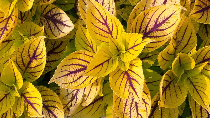 Flowers, Cantigny Park, Wheaton, Illinois