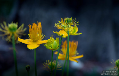Flowers in Light  Photography by Wayne Heim