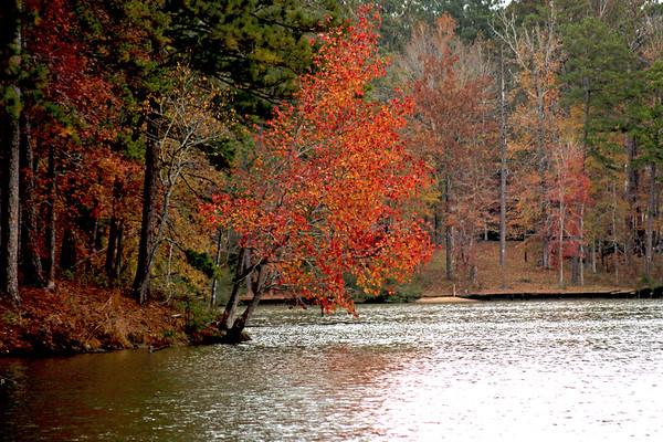Brilliant orange foliage on a lake bank