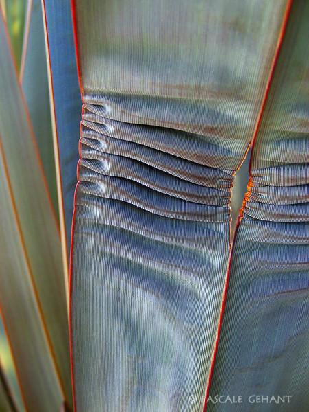 Vegetal folds