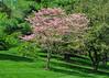 "<div class=""jaDesc""> <h4>Pink Dogwood Tree - May 7, 2015</h4> <p></p> </div>"