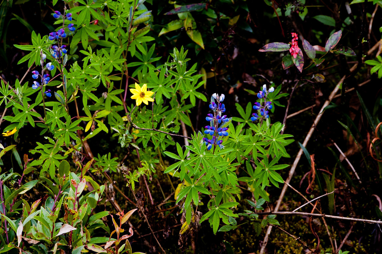 Wildflowers in Cloud Florest